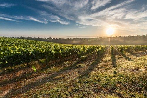 Site internet pour Vignobles loire-atlantique